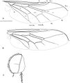 Sabroskya ogcodoides - ZooKeys-171-001-g003.jpg