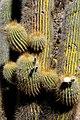 Salar de Uyuni 09.jpg
