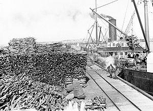 Santalum spicatum - Exported from Fremantle Harbour, 1905