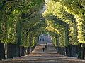 Schönbrunn Garten - Allee 2.jpg