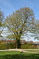 Schleswig-Holstein, Wedel, Naturdenkmal 07-07 NIK 2176.JPG