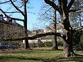Schlosspark-Kirchheimbolanden-02.JPG