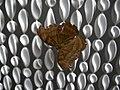 Schmetterlingsgarten Ludwigslust - geo.hlipp.de - 5595.jpg