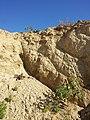 Schottergrube nordwestlich von Asparn an der Zaya sl4.jpg