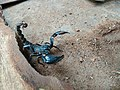 Scorpion (18).jpg