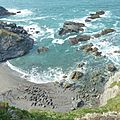 Seals at Godrevy 2011 (5692737353).jpg