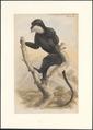 Semnopithecus cephalopterus - 1749-1842 - Print - Iconographia Zoologica - Special Collections University of Amsterdam - UBA01 IZA1000861.tif