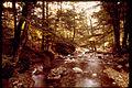 Shenandoah National Park SHEN9182.jpg
