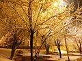 Shiraz - panoramio (9).jpg