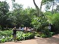 Singapore Zoo 34.JPG