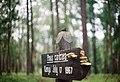 Singpost near a forest (Unsplash).jpg