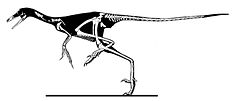 Sinornithoides youngi.jpg