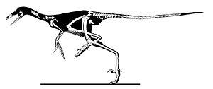 Sinornithoides - Skeletal restoration
