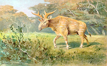 A deer-like animal wanders through a clearing.