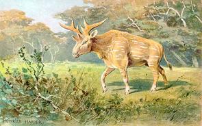Sivatherium (Gemälde von Heinrich Harder, 1916)