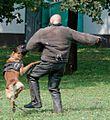 Službeni pes vojaške policije.jpg