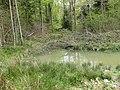Small pool, Haugh Wood - geograph.org.uk - 1270931.jpg
