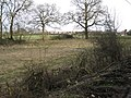 Smashed hedge by Brownley Green Lane - geograph.org.uk - 1767866.jpg