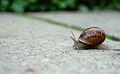 Snaileo Gonzales.jpg