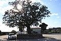 Sobreiro do Largo da Igreja - Parada de Todeia, Paredes - 02.jpg