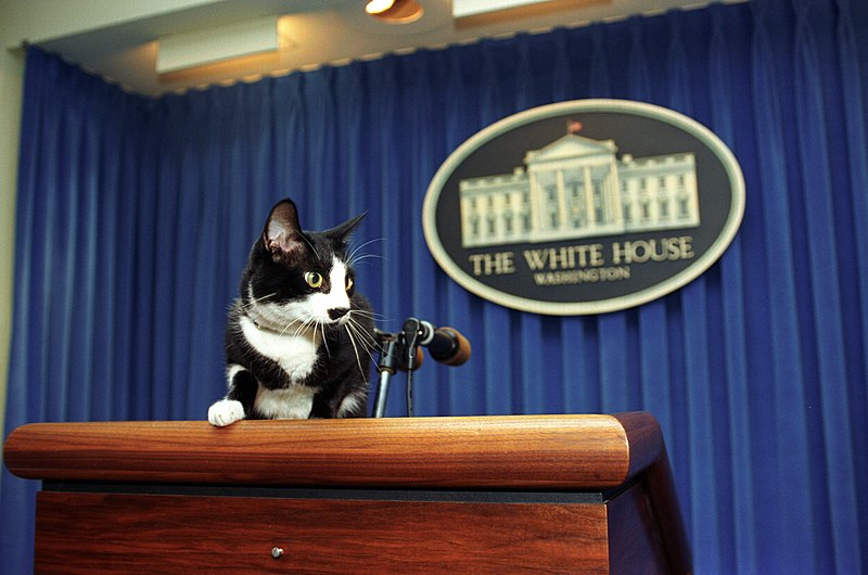 Socks at the podium in the White House Press Briefing Room by
