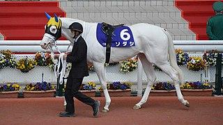 Sodashi (horse) Japanese Thoroughbred racehorse