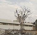 Solar tree.jpg