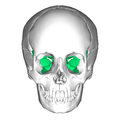 Sphenoid bone - anterior view.png