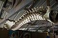 Spine (4805298074).jpg