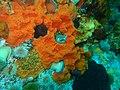 Sponges and anemones at Humpback Ridge P4170249.jpg
