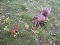 Squirrel-chipfaceoff.jpg