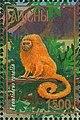 Stamp of Abkhazia - 1997 - Colnect 999821 - Leontideus rosalia.jpeg