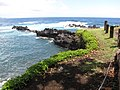 Starr-090623-1505-Sphagneticola trilobata-habit view ocean-Nahiku-Maui (24940385886).jpg