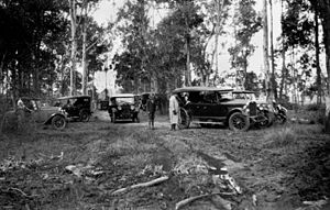Oxley, Queensland - Motor vehicles in the bush, 1930
