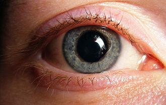 Pupille Wikipedia