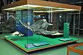 Stralsund, im Meeresmuseum (2013-02-13), by Klugschnacker in Wikipedia (76).JPG
