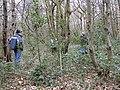 Surveying woodland in Pound Wood - geograph.org.uk - 1577763.jpg