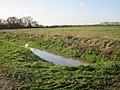 Swan on Fleet Dike (geograph 5321876).jpg