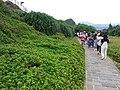 TW 台灣 Taiwan 新台北 New Taipei 萬里區 Wenli District 野柳地質公園 Yehli Geopark August 2019 SSG 118.jpg