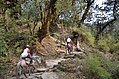 Taadapaani Uphill Ghorepaani Ghandruk Trail.jpg