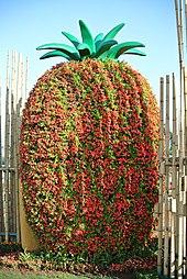 Malbelpuga ananaso