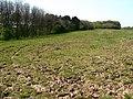 Target Plantation - geograph.org.uk - 425500.jpg