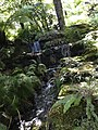 Tasmania gardens greenery.jpg