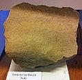 Tertiaire zandsteen, Nuth, geologische collectie, Museum Het Land van Valkenburg, Limburg.jpg