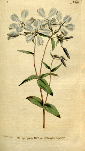 The Botanical Magazine, Plate 163 (Volume 5, 1792).png