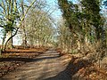The Bridleway to Chalgrove - geograph.org.uk - 93360.jpg