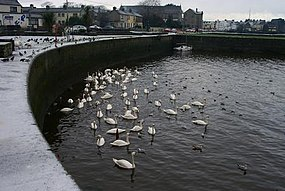 The Claddagh, Galway.jpg