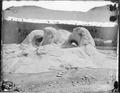 The Grotto, Yellowstone - NARA - 516804.tif