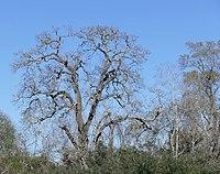 The Haunting Tree.jpg