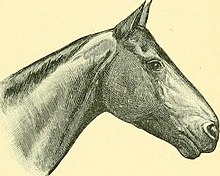 The Horse - its treatment in health and disease, with a complete guide to breeding, training and management (1905) (14577468399).jpg